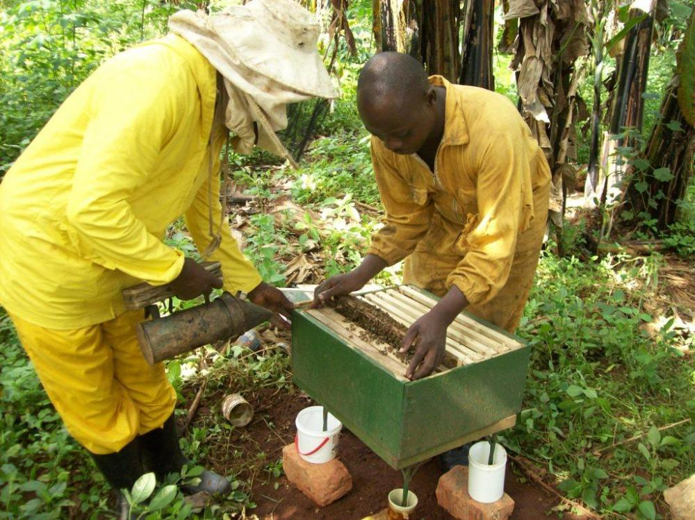Beekeeping – a bright perspective for Uganda's poor farmers