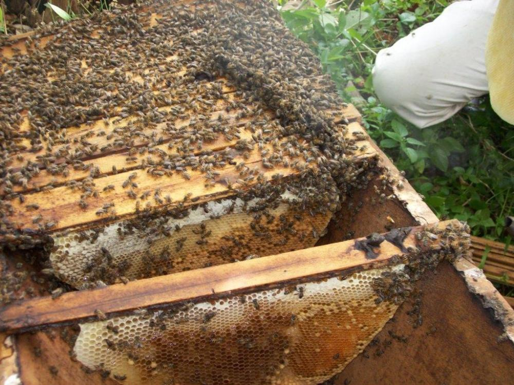 SUPPORT US TO SEND BEES TO WORK AS WE KEEP LOCAL FARMERS' CHILDREN IN CLASS THAN MAKING THEM (CHILDREN) WORK AS THEY MISS THEIR CLASSES.