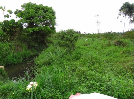Water Source adjacent to where school water is collected. Crops and Cattle immediately beside the water