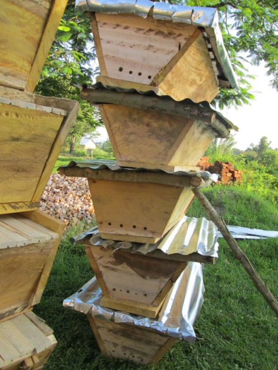 Hives Constructed with Funds Raise on Global Giving Platform