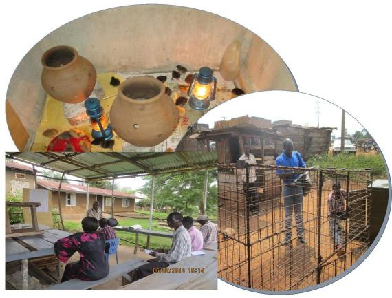 Cage Fabrication, Brooding and Training in Poultry keeping basics