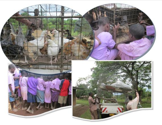 Kibiribiri-Cage-Delivery