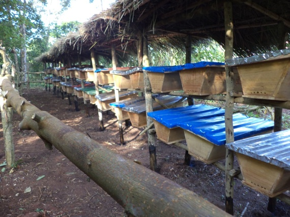 Some of the 100 constructed hives already  up ready to be colonized by bees